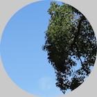 thumb_column_180406_1